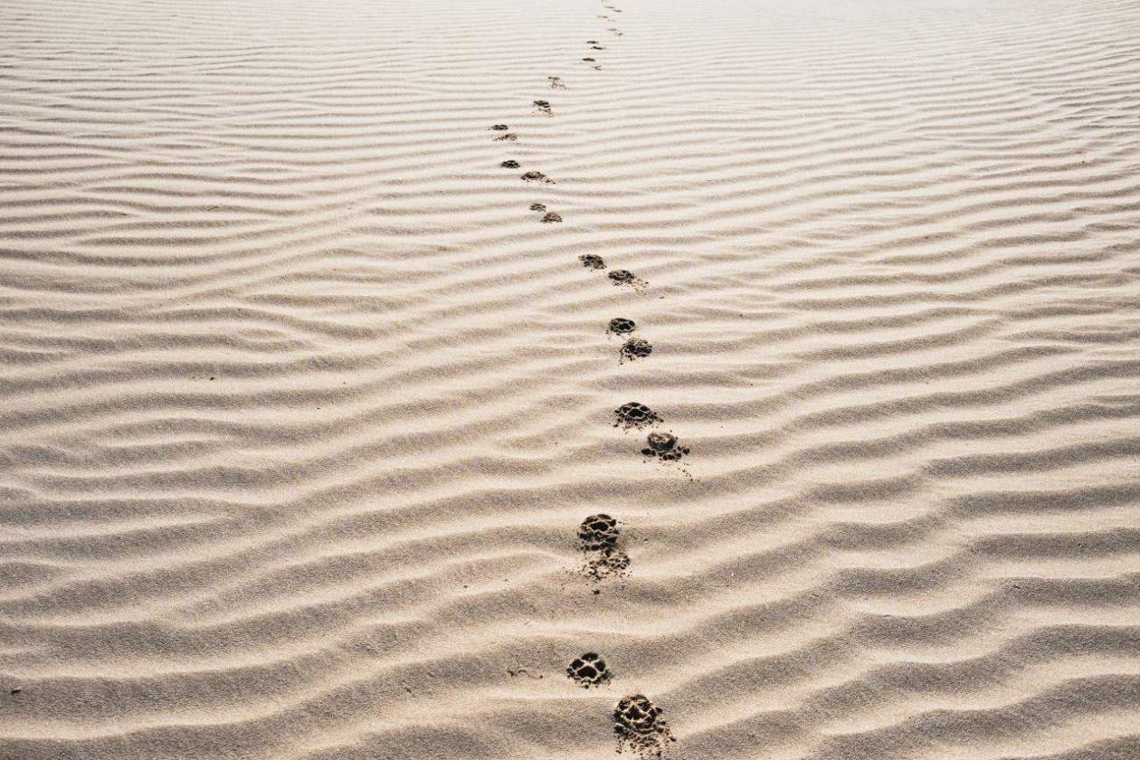 Faith to Follow