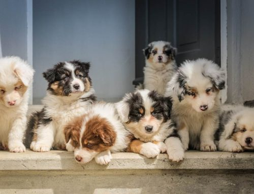 What is the best breed of dog and why?
